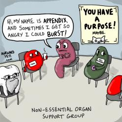 Non-essential organ support group. I find this funny cause my boss takes most of these out....: Organ Support, Nonessential, Nurse, Non Essential Organ, Funny Stuff, Funnies, Humor, Support Group