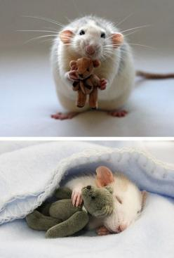 Not everyone thinks rats are cute, but I do, especially if they have stuffed animal friends.: Mice, Mouse, Animals, Teddy Bears, Pets, Rats