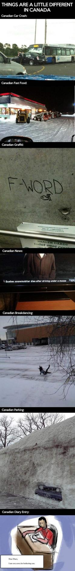 Oh just Canada.. // funny pictures - funny photos - funny images - funny pics - funny quotes - #lol #humor #funnypictures: Giggle, Canada, Canadian Stereotypes, Canadian Friends, Funny Stuff, Things, It S Funny, Canadian Thing