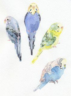 Parrots / Parakeets... My boys have a green cheeked Conure and a Sun Conure, which are the most amazing little creatures. They love and are loving and such sweet spirited little birds!: Colour, Animals, Parrots, Colorful, Colors, Rainbows, Beautiful Birds