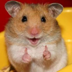 PetsLady's Pick: Cute Animal of the Day  ... from PetsLady.com ... The FUN site for Animal Lovers: Funny Animals, Idea, Stuff, Pet, Hamsters, Funnies, Things, Smile