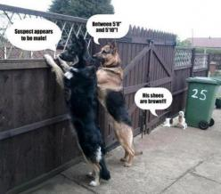 Police Dogs - funny pictures - funny photos - funny images - funny pics - funny quotes - funny animals @ humor: Animals, Dogs, Funny Stuff, Funnies, Humor, Funny Animal, German Shepherd
