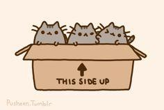 Pusheen the cat kittens. Cute plusheen kittens in a box with two fighting. :) Aww! <3