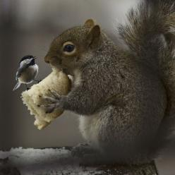 So adorable!: Animals, Friends, Critter, Squirrels, Nature, Bread, Photo, Birds
