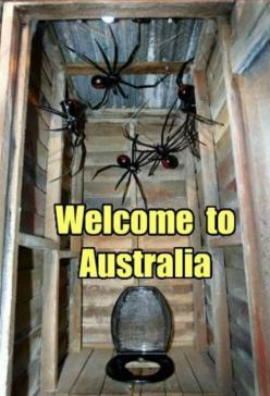 So, what you waiting for? | 19 Reasons Why Arachnophobes Should Give Australia A Miss: Nope Spider, Australia Humor Spiders, Nope Nope, 19 Reasons, Australia Nope, Australia Spiders, Giant Spiders Australia