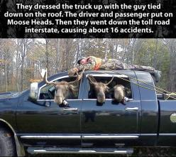 Some people are just too awesome for life... <--how the heck did the driver know where to go?!?!: Funny Pics, Funny Pictures, Funny Images, Funny Quotes, Funny Stuff, Funny Hunting Quotes, So Funny