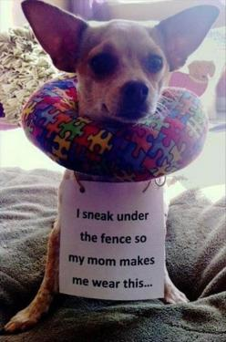 That�s a smart move�                                                       (rePinned 090413TLK)                                                        not my thought bubble, the owner has already done it for me!: Animals, Dog Shaming, Pet, Funnies, Funny