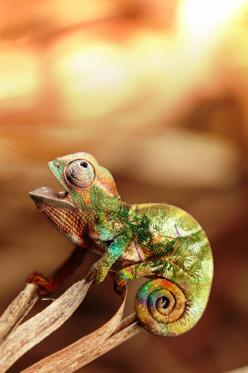 This Chameleon looks f*cking retarded and I think it's hilarious... It's things like this that can make you laugh on a boring day ;): Animals, Chameleons, Nature, Creatures, Camaleon, Amphibians Reptiles