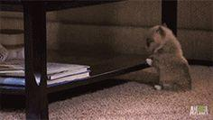 This puppy's attempt to reach new heights.   The 61 Most Awkward Moments In The History Of Dogs