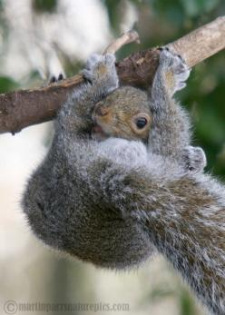 Today go out of your way to say hi to someone...You never know how a little hello can cheer someone up.: Ardillas Squirrels, Funny Squirrel, Creature, Squirrels Thing, Animals Cute Critters, Photo Sharing, Nuts, Amazing Animals, Ecureuil