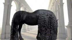 WOW! I can't even imagine how much work that mane would be to take care of.  It sure looks beautiful though so maybe it would be worth the work!!  horses with long manes tails | horse-mane: Beautiful Horses, Animals, Equine, Friesian Horse, Black Hors