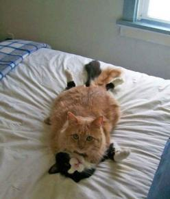 """19 Cats Who Had No Idea You'd Be Home So Early The caption says""""You could have at least knocked!"""": Animal Pictures, Animals, Funny Cat Pictures, Funny Cats, Pet, Funny Stuff, 19 Cats, Chat, Photo"""