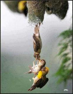 Amazing picture of baby bird being saved after falling from nest: Animals, Parents, Quotes, Birds, Photo