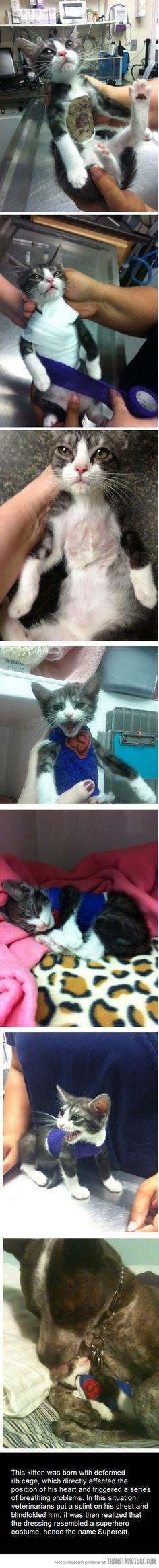 Awwww omg this is sad at first, but the cutest thing ever!!!: Cutest Pirate, Sweet, My Heart, Pirate Kitten, Animal