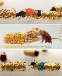 Caddis fly larvae are known to incorporate bits of whatever they can find into their cocoons, be it fish bone or bits of leaves. Hubert Duprat gave them gold, turquoise, gems and pearls.: Duprat Supplied, Caddisfly Larvae, Precious Stones, Gold Leaf, Larv