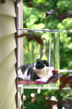 cat bed window: Cats, Kitty Cat, Cat Window, Idea, Indoor Cat, Pet, Windows, Animal