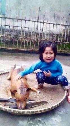 Child grieves over pet dog slaughtered. People dont like to think that abusing animals is abusing those who love them too.: Little Girls, Animal Rights, Pet Dogs, Animal Cruelty, Pets, Animal Abuse, Vietnam