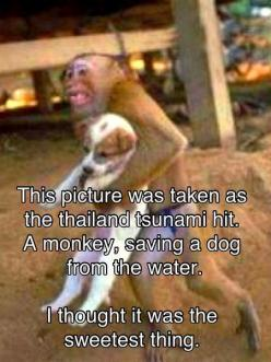 cutest and sweetest thing: Picture, Animals, Dogs, Hero, Awesome, Puppy, Things, Monkey Saving