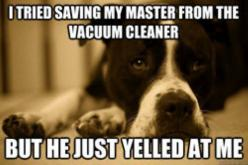 Dog Problems: Vacuum Cleaners, Animals, Dogs, Pets, Funny, Humor, Funnies, Things