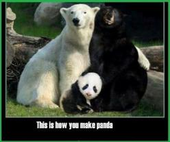 Don't tell me this isn't true as well @collinwho I don't think I could handle it.: Animals, Bears, Black Bear, Funny Stuff, Funnies, Funny Animal, Pandas