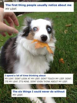 Don't touch the leaf, seriously…: Animals, Giggle, Dogs, Funny Stuff, Humor, Funny Animal, Leaf, Leaves