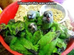 funny animals: Salad, Funny Animals, Thoughts, Funny Stuff, Funnies, Humor, Birds