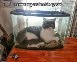 funny cat pictures: Funny Animals, Funny Cats, Funny Stuff, Crazy Cat, Funnies, Humor, Bit Special, Cat Lady