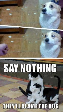 Funny Pictures Of The Day - 73 Pics #compartirvideos #funnypictures #uploadffunny: Funny Animals, Cats, Dogs, Funny Pictures, Funny Stuff, Humor, Funnies, They Ll Blame