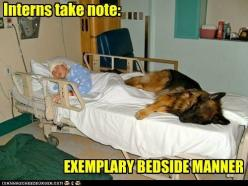 German Shepherd Hilarious | ... - child - Loldogs n Cute Puppies - funny dog pictures - Cheezburger: Germanshepherd, Animals, Sweet, Dogs, Best Friends, Pets, German Shepherds, Things, Hospital