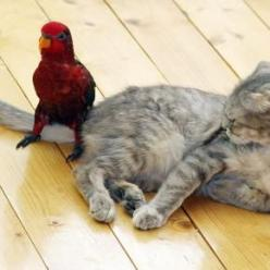 Getting along just fine...: Cats, Animals, Friends, Pet, Funnies, Funny Animal, Photo, Birds