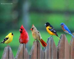 Goldfinch, Cardinal pair, Oriole, Eastern Bluebird. http://RetireFast.info: Animals, Nature, Color, Real Angry, Beautiful Birds, Angry Birds, Photo, Angrybirds