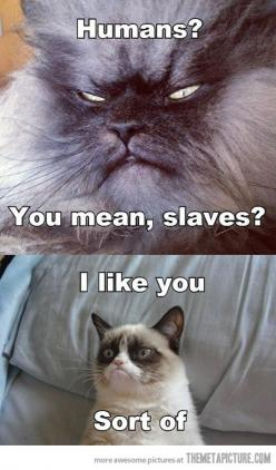 Grumpy cat: Giggle, Animals Funny, Grumpycat, Funny Ungry Cats Annoyed, Cat Meets, Baby Cats, Grumpy Cats