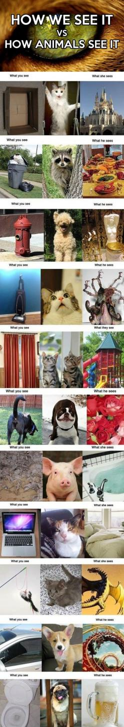 How we see it vs. how animals see it: Funny Animals, Giggle, Cat, Funny How Animals See Things, Pet, Funny Animal Humor Lmfao, So Funny, Dog