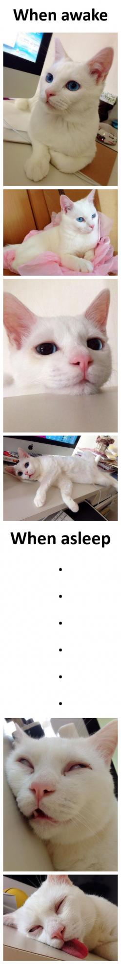 I die!!: Sleeping Beauty, Kitty Cats, Beautiful Cats, Funny Cat, Crazy Cat, Gorgeous Cat, Cat Sleeping, Cat Lady