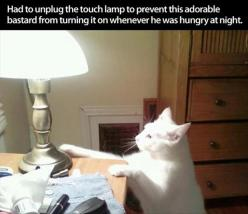 I laughed too hard at this.: Cats, Lamps, Animals, Adorable Bastard, Funny, Funnies
