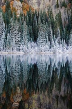 I love how stunning the trees look when they are reflected in water. It almost looks unnatural how perfectly they are reflected, almost like the water is a mirror.: Rocky Mountain National, Reflection, Nature, Rocky Mountains, Winter Wonderland, National