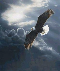 Isaiah 40:31 but those who hope in the LORD will renew their strength. They will soar on wings like eagles; they will run and not grow weary, they will walk and not be faint.: Picture, Animals, Wings, Beautiful, Art, Bald Eagles, Birds