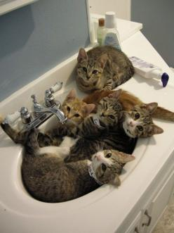 Just because you got cats in your sink doesn't make it okay to skip brushing your teeth! #DeltaDental: Cats, Animals, Kitten, Pet, Sinks, Crazy Cat, Kitty, Sink Full, Cat Lady