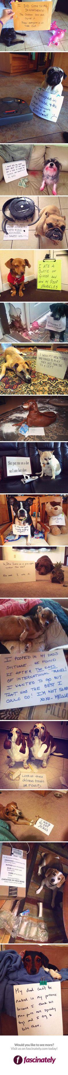 Meet the Naughtiest Dogs of 2014 - these cracked me up! It could partially be my lack of sleep right now but please enjoy :)  (sorry for the few inappropriate ones): Funny Pets, Naughtiest Dogs, Dogs Ear, Dog Shaming, Dogs Funny Humor, Funny Dogs, Bad Dog