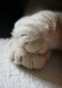 nap time: Cats, Cat Paws, Kitty Cat, Animals, Kitty Feet, Kitty Kitty, Chat