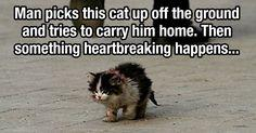 Now this picture is something else...: Cat Beautiful, Guy, Pics Articles, Animals God, Meaningful Picture, So Sad, Sad Animal Pictures