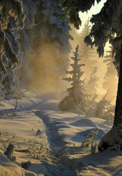 One of the most beautiful winter forest scenes I've ever laid eyes on #snow ☮k☮ #winter: Winter Beauty, Nature, Snow, Winter Wonderland, Place, Winter Scenes, Photo