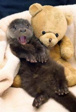 Otter baby photo!: Animals, Stuff, Otters, Funny, Nails, Things, Smile