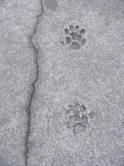 Paw prints of Hemingway's cats, Hemingway House, Key West: Polydactyl Cat, Hemingway Cat, Cat Paw, Keywest, Photo