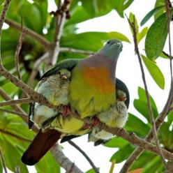 Pigeon protecteur: Mothers Love, Animals, Nature, Wings, Baby, Photo, Birds