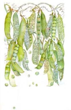 Pretty peas by the talented Sara Midda...: Watercolor, Inspiration, Illustration, Book, Botanical Art, Garden, Drawing