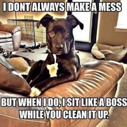 "So flippin' true! Then if I ask her, ""Did you do this"", she shows me her teeth!!: Like A Boss, Animals, Dogs, Funny Stuff, Humor, Funnies, Funny Animal, Likeaboss"