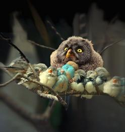 "The look on this owls face is the same one I have some days after ""family time"" with all 5 kids...hehe.: Animals, Beautiful, Funny, Things, Baby, Birds, Photo, Owls"