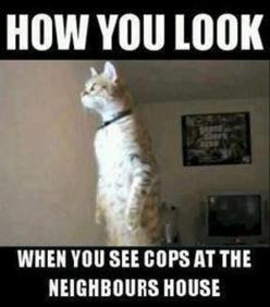 This is how you look when you see cops at the neighbor's house. Since this happened twice this week!: Cats, Animals, Funny Picture, So True, Funny Stuff, Funnies, Humor
