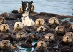 Wrong place...: Dog Park, Animals, Border Collie, Dogs, Otters, Funny Stuff, Funny Animal, Photo